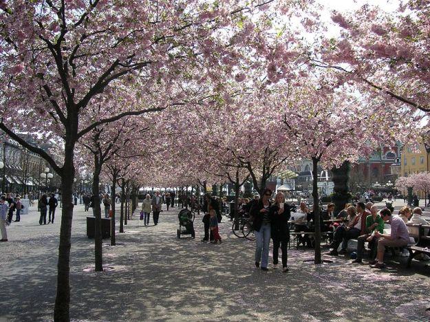 Bloesem Stockholm